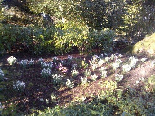 Los Jardines de Altamont, Condado de Carlow